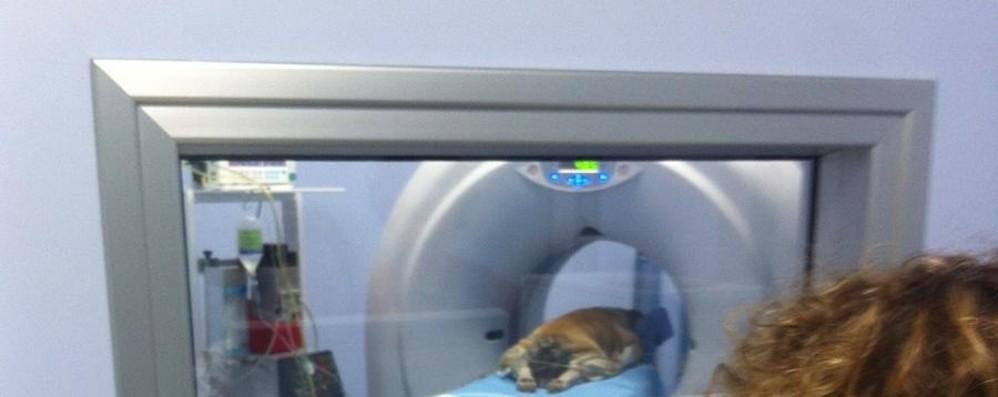 Una Tac per cani e gatti Ora è possibile in via Baioni