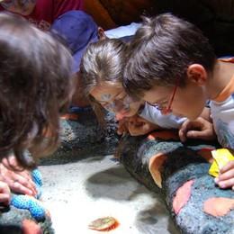 Laboratori per i bambini a Gardaland Sea Life