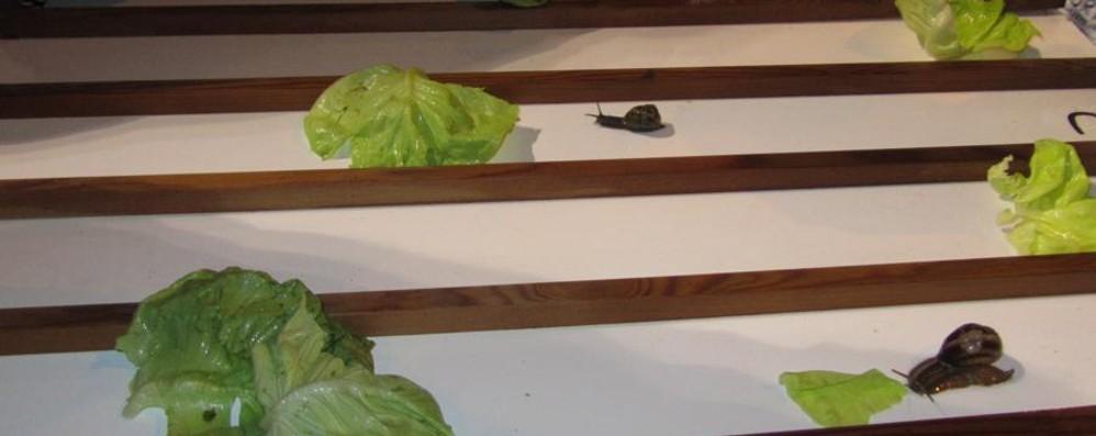Tombolina star a Martinengo Vince la corsa delle lumache