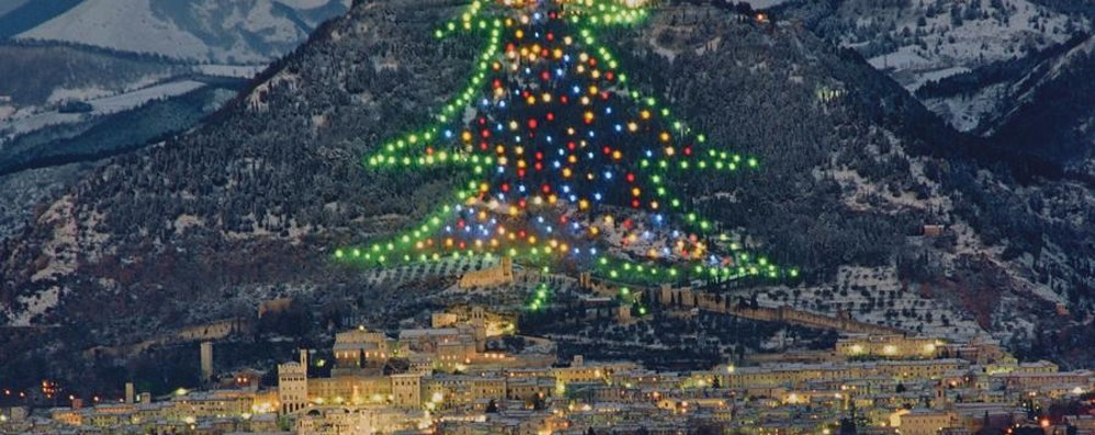 Gubbio, un albero da record E la città profuma di tartufo
