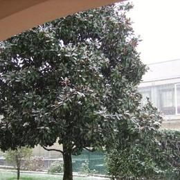 Neve a Mapello foto di Everardo