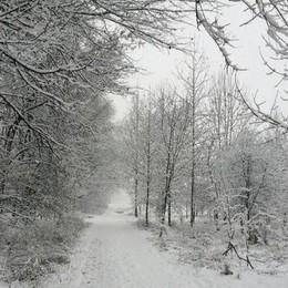 Il Parco del Serio a Mozzanica di Andrea Bussi