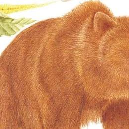 Orobie, una App del Parco  porta sulle tracce dell'orso