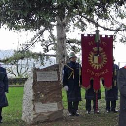 Foibe, Bergamo non  dimentica  Un ulivo piantato in un parco
