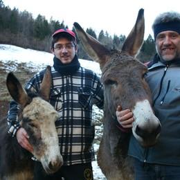Buon latte e bravi «netturbini»  In valle è «caccia» agli asini