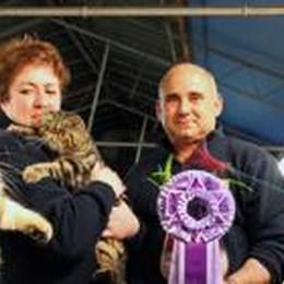 A Zanica rassegna che fa le fusa  Con i gatti più belli del mondo