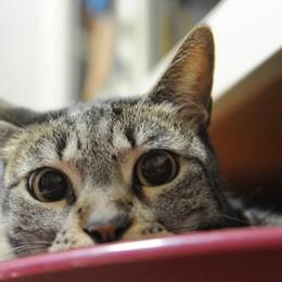 Chi si occupa  dei gatti liberi?