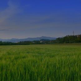 Troppa acqua, agricoltura in affanno  Anche i cereali «affogano» nei campi