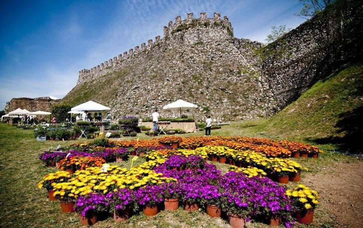 Fiori nella Rocca  a Lonato del Garda