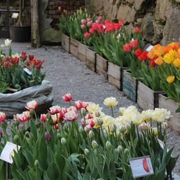 I tulipani all'orto botanico  tra mostre e visite guidate