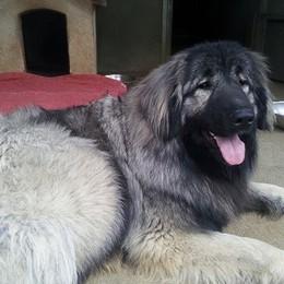 Nuvola ricomincia una nuova vita  Il cane di Schena adottato a Castione