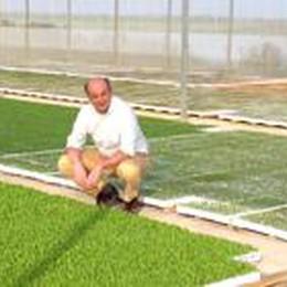 Le insalate Agronomia in Borsa  Investimenti per tredici milioni