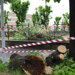 Cade un ramo da una pianta   Sfiora una donna, paura a Treviglio