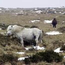 Si finge colonnello dell'Esercito  per comprare un pony: denunciato