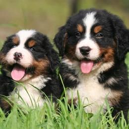 Cani di razza a «Le Due Torri»  Madrina d'eccezione Anna Falchi