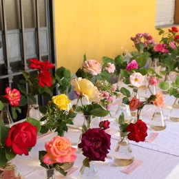 Giornata del fascino delle piante Il 18 maggio tutti all'Orto Botanico