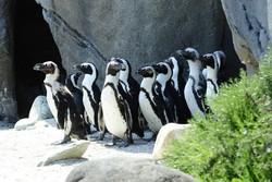 I pinguini di Zoom
