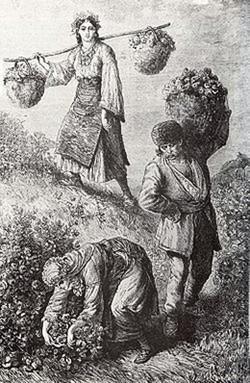 Bulgaria, la raccolta delle rose nell'Ottocento