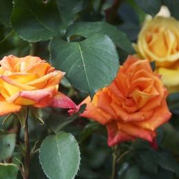 Bulgaria, «il Paese delle rose»  Ma c'è anche Orfeo e i re di Tracia