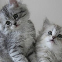 Sevizie sui gatti, interviene l'Enpa: «Caso grave, coinvolti criminologi»