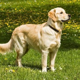 Artrite e connettivite  entra in campo la pet terapy