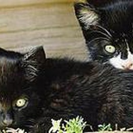 Domenica «calda» a  Trescore  Presidio contro il killer dei gatti