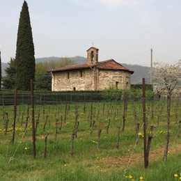 Spumante unico:  uve di Franconia