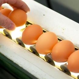 Se il Comune vende uova