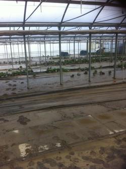 I danni all'azienda florovivaistica Plebani