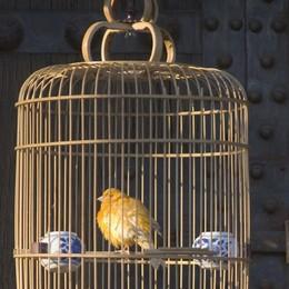 Fiere ornitologiche, il no della Lav  «Continueremo a manifestare»