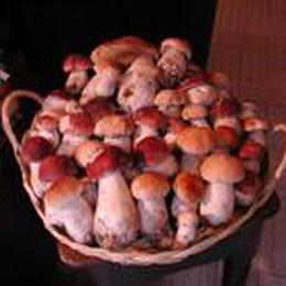 Ancora un weekend con l'ombrello  La consolazione sono i funghi