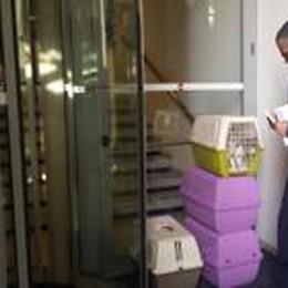 L'odissea dei dodici gatti: alle Cornelle  Appello perché tutti trovino una casa