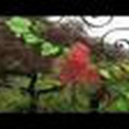 I Puffi Vendemmiatori vincono la Festa dell'Uva a Foresto