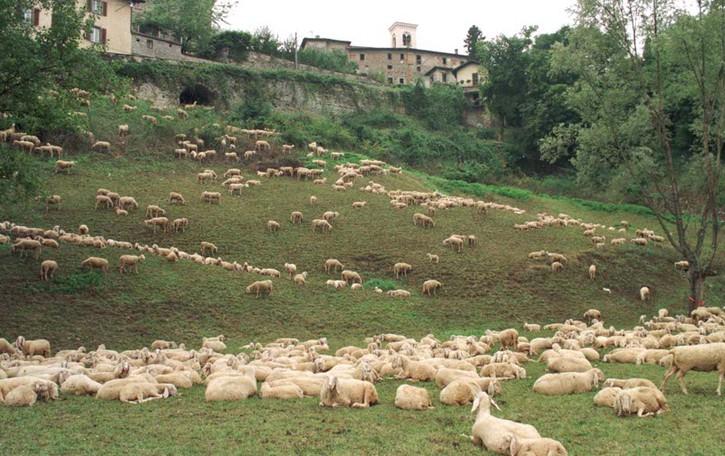 Bergamo, da un gregge di 200 pecore  la polvere da sparo per la Serenissima