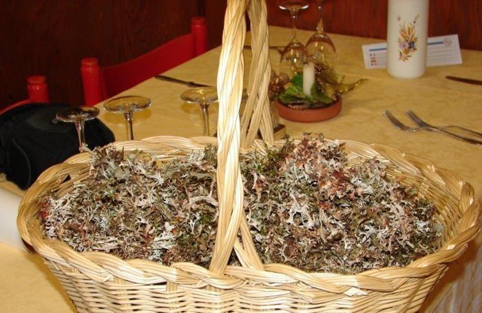 Licheni tra gli ingredienti dei piatti del ristorante