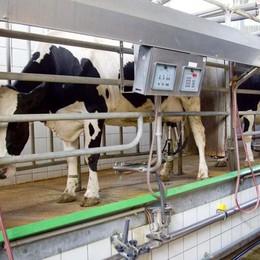 Crolla il prezzo del latte, è allarme «Produzione a rischio azzeramento»