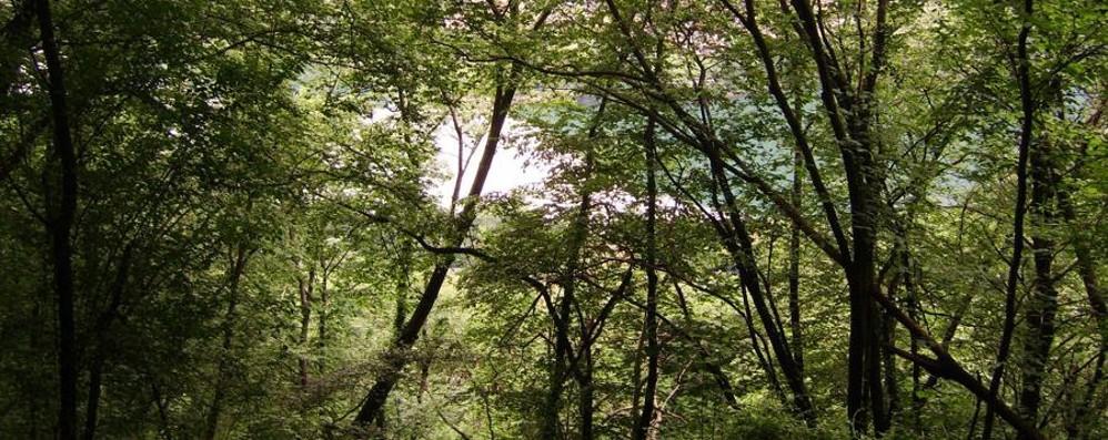 Crescono i boschi della Lombardia Un «campo da calcio» ogni 5 ore