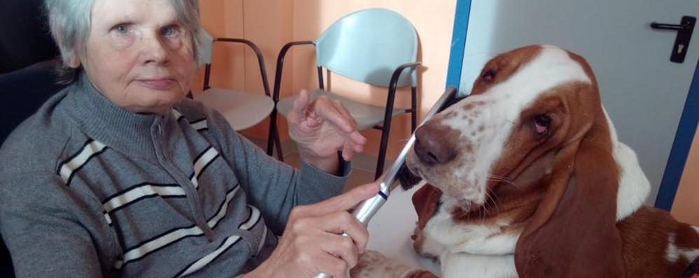 Così nasce un «angelo» a quattro zampe Pet Therapy, la storia di Peppa