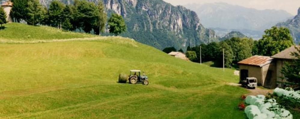 Imu agricola, l'apprezzamento di Misiani e Coldiretti