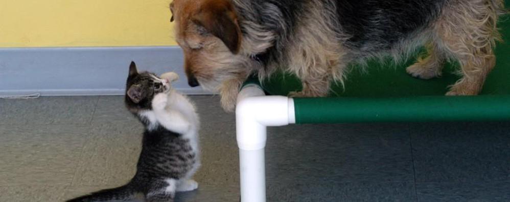 Con la crisi si taglia anche sugli animali Meno spazio in casa per cani e gatti