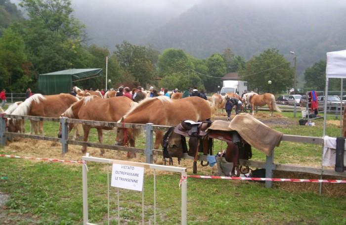 Cavalli alla mostra agricola di Carenno