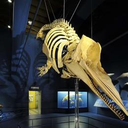 Evoluzione, paleontologia e scienza Al Caffi iniziative per grandi e piccini