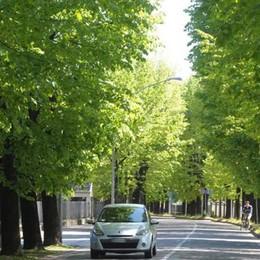 Gli alberi vanno prima conosciuti Poi si possono anche curare