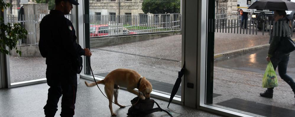Controlli anti droga in stazione Il cane fiuta uno zaino sospetto