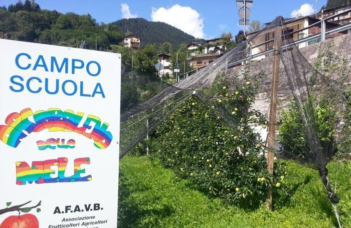 Campo scuola di Moio' de Calvi