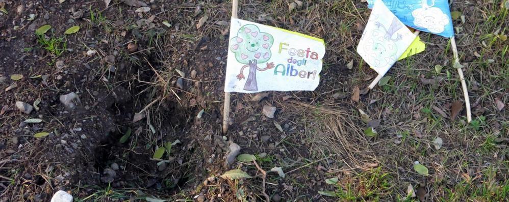 Rubati gli alberelli piantati dai bimbi al parco