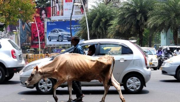 India:stop documentario su carne mucca