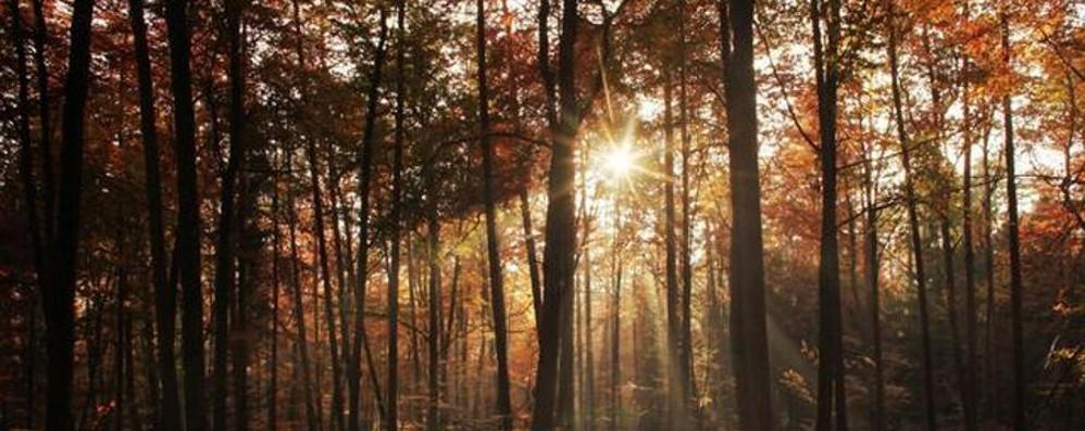 Giorni all'insegna del sole Il freddo la prossima settimana