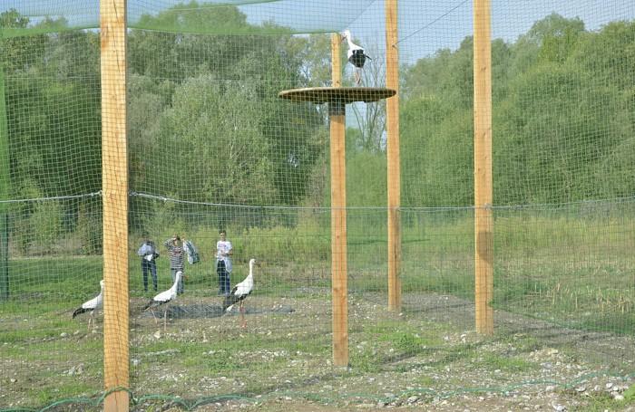Cicogne al Parco del Serio