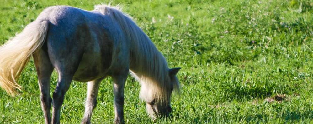 Cade da cavallo a Valsecca Grave donna di 47 anni